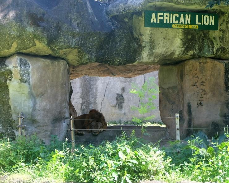 dyosathemomma: Avilon Zoo, why bring kids to the zoo, animals in Avilon zoo